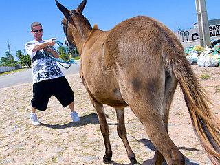 Donkeys & Brazilian Chicks